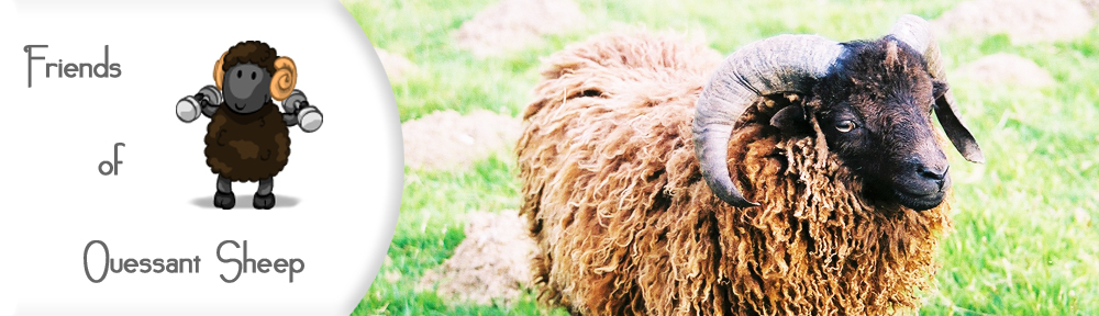 Friends of Ouessant Sheep